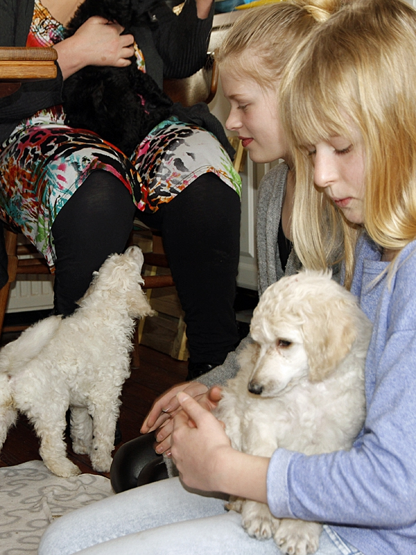 Hvalpene har besøg af fire søde piger