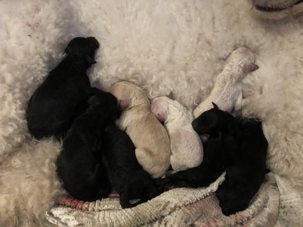 07.02.19 8 nyfødte hvalpe