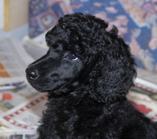Nr 1 25-03-2019 kommende førerhund
